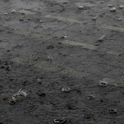 Regenbui tijdens de Wereldhavendagen
